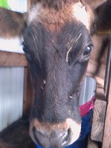 Bessie (1)