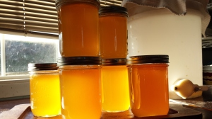 Honey harvested 2014